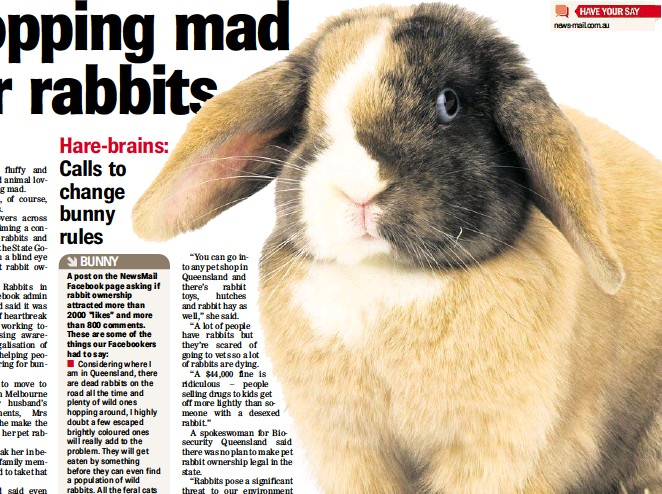 Pressreader Newsmail 2014 06 03 Hopping Mad For Rabbits