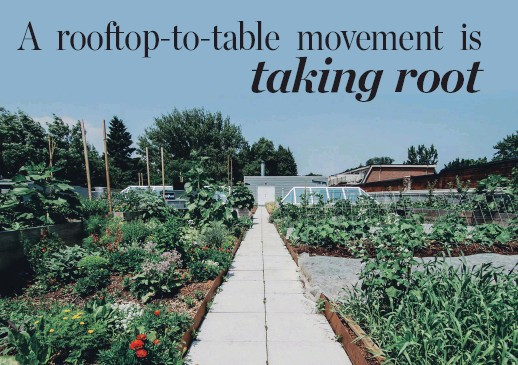 ??  ?? Above: The 4,000-square-foot rooftop garden at Toronto brewery/restaurant Avling.