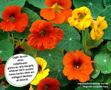 ??  ?? Legen Sie sich einen - Heilpflanzen das geht, garten an. Wie in unserer erfahren Sie Serie von neuen Garten- Hildegard Riedmair ab Seite 82 Kapuzinerkresseblüten sind ein Hingucker auf jedem Salat