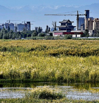 ??  ?? Zhangye National Wetland Park is crucial to the city's eco-system and plays a central role in water resource regulation and conservation.