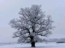 ??  ?? FAVORIT 2. Lasse Lundberg fotograferar gärna träd. Hellre avlövade än grönskande.