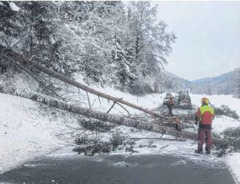 ?? FOTO: SEBASTIAN DREHER ?? Wegen akuter Schneebruchgefahr sind am Dienstag an der Straße zwischen Mühlheim und Mahlstetten einige Bäume aus dem Wald geholt worden. Die Straße war nach den heftigen Schneefällen der vergangenen Woche gesperrt, ist am frühen Dienstagabend aber wieder freigegeben worden.