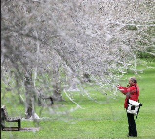 """?? Picture: Geoffrey Robinson/rex/shutterstock ?? """" Ghost-like trees covered in the white webs."""