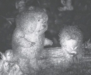 ??  ?? Создавая «Ёжика в тумане», Юрий Норштейн смешал документальную съёмку, рисунок, кальку – и получился фантастический мир.