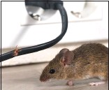 ??  ?? HUNTED: The HQ has a rodent problem