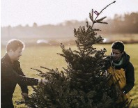 ??  ?? Darts Farm is about to get its first delivery of sustainably harvested Christmas trees from the Dartmoor Christmas Tree Company