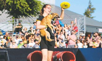 """?? MEGHAN WILCOX ?? Mesa Smith, 17, has been working with dogs since she was 7. She and her dogs now perform with the Canine Stars Stunt Dog Show. TOP: Mesa and her dog Delta appear on """"America's Got Talent."""" RIGHT: Mesa and Delta at a county fair."""
