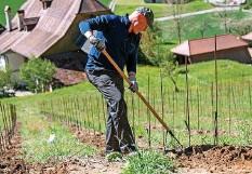 ??  ?? Ein Mitglied der Rebbaugenossenschaft Burdlef lockert nach dem Einsatz des Kleinbaggers die Erde auf.
