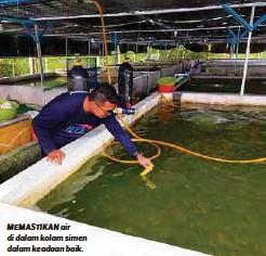 ??  ?? MEMASTIKAN air di dalam kolam simen dalam keadaan baik.
