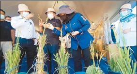 ??  ?? 羅納建迪(左2)專心聆聽有關斯里哇嘉和格邦沙麗新米種的栽種方法。