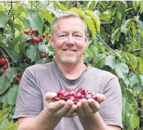 ?? PHOTO: JARED MORGAN ?? Ripe for the picking . . . Cheeki Cherries/Dam Good Fruit owner Martin Milne holds some of this year's harvest. He remains optimistic despite looming labour shortages in the industry.