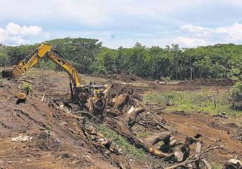 ??  ?? Talados. Cientos de árboles fueron talados en el parque botánico El Obrajuelo, del municipio de San Miguel, para la construcción del periférico Gerardo Barrios.
