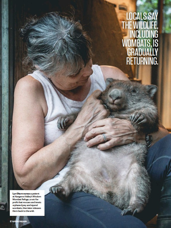 ??  ?? Lyn Obern nurses a patient at Kangaroo Valley's Wisdom Wombat Refuge, a not-forprofit that rescues and treats orphaned joey and injured wombats, then later releases them back to the wild.