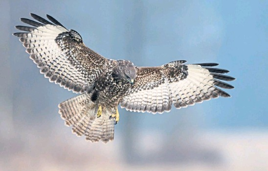 ??  ?? WILD BEAUTY: Nature considers human beings, and not predatory birds of prey like buzzards, to be its problem child.