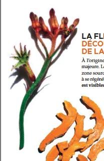 Pressreader Marie Claire 2018 10 04 La Fleur Kangourou