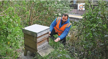 ??  ?? Otero, the founder of energy Garden, tending to a bee hive in a section of the garden on the platform at Brondesbury Park Overground train station in London. 'energy Garden is really about building resilience in communities. It's about how we directly address the climate change issue that everybody feels they are powerless to do,' he says. — AFP