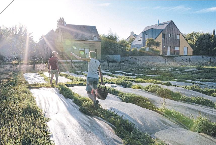 ?? Andrea mantovani/nyt ?? Cambio de escala. Granja de permacultura en Langouët, Francia, impulsada en un terreno proporcionado por la aldea, en septiembre de 2019