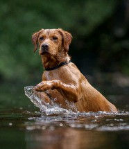 ??  ?? Flea treatments used on dogs are causing damage to our rivers, says a new study