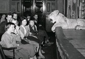 """??  ?? 1 VILKEN ARKITEKT? Här sitter ungdomar i Konserthuset och lyssnar på Jan Högbergs föredrag """"Tacka vet jag djur"""" där även djur, som här ett lejon, visades upp. Men vem är arkitekten bakom den blåa byggnaden? 1. Ragnar Östberg X. Ivar Tengbom 2. Holger Blom"""