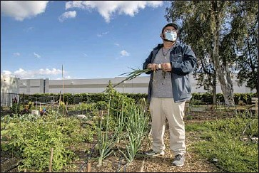 ?? Gina Ferazzi Los Angeles Times ?? JORGE HEREDIA'S first job was at a Kohl's warehouse. Now a director at an arts center, he grows vegetables in a community garden plot next to a Mattel warehouse, and has deep concerns about the industry's impact.
