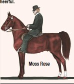 ??  ?? Moss Rose