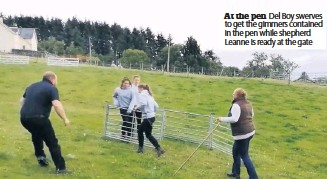 ??  ?? At the pen Del Boy swerves to get the gimmers contained in the pen while shepherd Leanne is ready at the gate