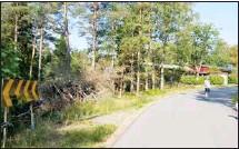 ??  ?? TRÖTT PÅ RISET. Dags att det kommer bort, säger Sune Sjöholm, här på promenad med hunden.