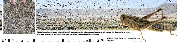 ??  ?? Middelburg district locust officer Christoff Vermeulen, left, collects dead locusts on a farm near the Eastern Cape town, where swarms are consuming hectares of key winter feed crops within minutes.