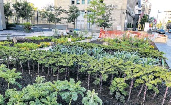 ??  ?? Last year the first garden of its kind in the Colliers network was created, converting the land in front of the Desjardins office building at 95 St. Clair Ave. W., in Toronto, into an urban farm.