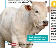 ??  ?? South Africa is home to about 12 million cattle.