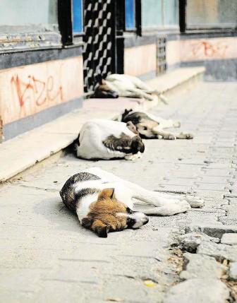 """?? """"Bukurešť je město, které psy miluje i nenávidí.""""(Margo Rejmer). FOTO PROFIMEDIA ??"""