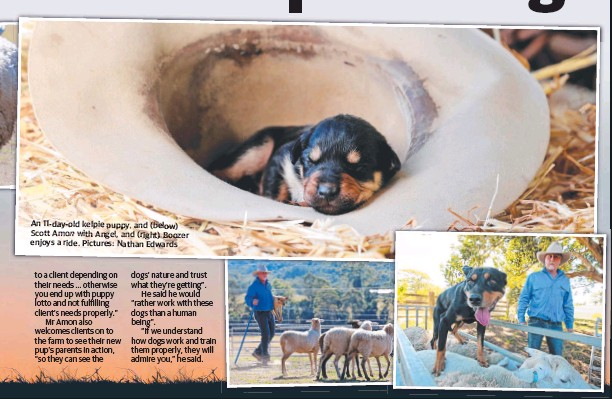 Pressreader The Daily Telegraph Sydney 2018 10 20 Pup Lifting Tail Of A Friendship With Legs