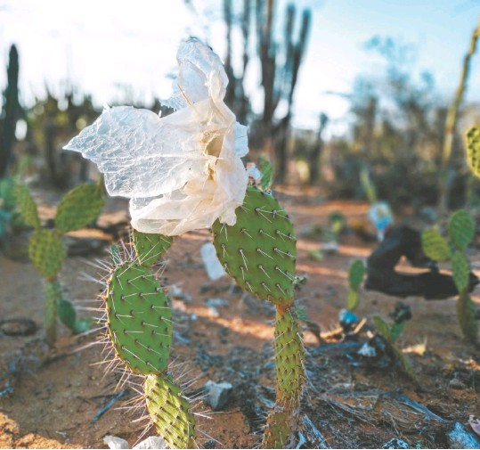 ??  ?? Más de 300 voluntarios se han vinculado al proyecto #Yosoyguajira. Desde mediados del año hacen campañas regionales en sus ciudades para recolectar fondos y ayudas que llevan a la zona a final de año. Con los recursos han financiado cuatro aulas ambientales.