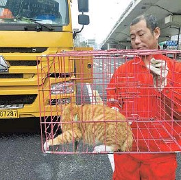 ??  ?? A stray cat is removed from an elevated road. — Ti Gong