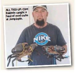 ??  ?? ALL TIED UP: Clint Baldwin caught a feed of mud crabs at Jumpinpin.