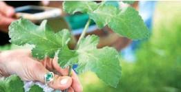 ?? Photo Ulamir ?? La sortie du samedi 27 juin sera l'occasion d'apprendre à identifier quelques plantes sauvages comme ici la berce.