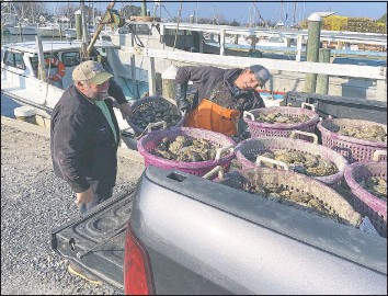 ?? BAY JOURNAL PHOTO BY JEREMY COX ?? Bill Huber and Jason Robbins hoist a bushel of oysters into the back of a pickup truck on Hooper's Island in December 2020. Bay watermen are having little trouble reaching their state-im