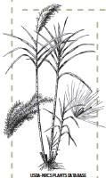 ?? USDA-NRCS PLANTS DATABASE ??