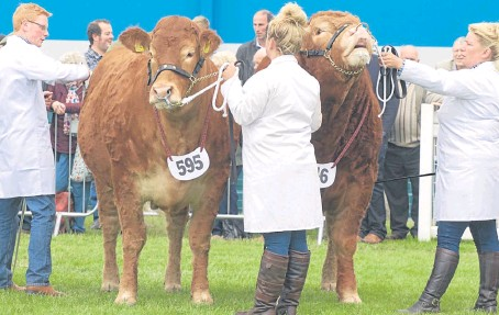 ??  ?? The Limousin team From MJ Alford, Cullompton, Devon, the furthest-travelled cattle at the show, took the reserve beef pairs interbreed.