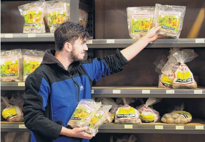 ?? PHOTO: STEPHEN JAQUIERY ?? Re­stock­ing . . . Nichol's Gar­den Cen­tre staff mem­ber Adam Jamieson sorts the dwin­dling sup­ply of seed pota­toes in the Dunedin store yes­ter­day.