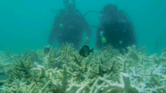 ?? CONTRIBUTED PHOTO ?? OCEAN-DEEP DEDICATION Divers and members of Sangkalikasan group check out damaged coral reefs in Subic Bay as part of a coral restoration project meant to preserve the area's marine resources.