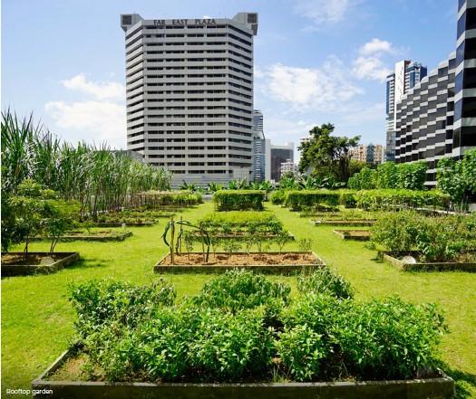 ??  ?? Rooftop garden