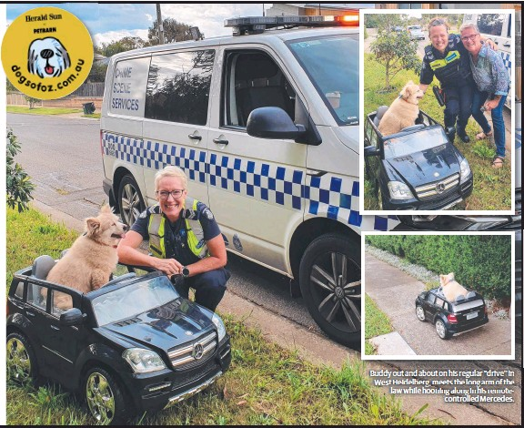 """??  ?? Buddy out and about on his regular """"drive'' in West Heidelberg, meets the long arm of the law while hooning along in his remotecontrolled Mercedes."""
