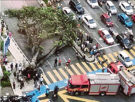 ?? PIC COURTESY OF READER ?? The fallen tree across Jalan Ampang in front of KLCC yesterday.