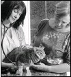 ?? Ted Rhodes, Calgary Herald ?? Vet Dr. Wendy McClelland listens to the heart of feline patient Bart during an examination at the home of Janice lovejoy.