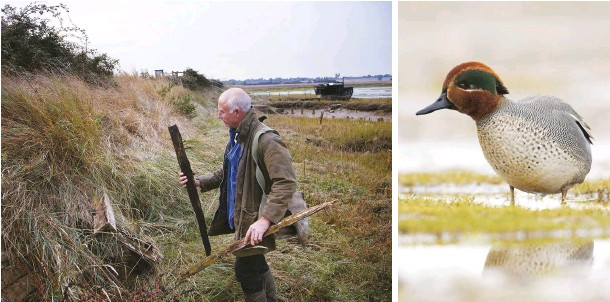 ??  ?? ABOVE Pieces of driftwood become the material for Stephen's sculptures ABOVE RIGHT The habitat of the Essex marshes is ideal for common teal