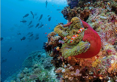 ??  ?? Liveaboards take you to remote destinations like coral capital Raja Ampat, Indonesia.