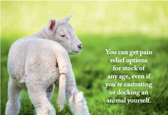 ??  ?? You can get pain relief options for stock of any age, even if you're castrating or docking an animal yourself.