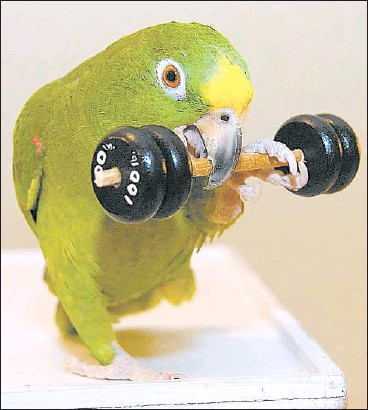 Parrot's best trick: The birthday gift - PressReader