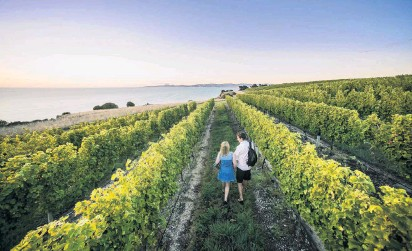 ?? PHOTO: DESTINATION MARLBOROUGH ?? Quality time . . . Wandering among the vines in Blenheim.